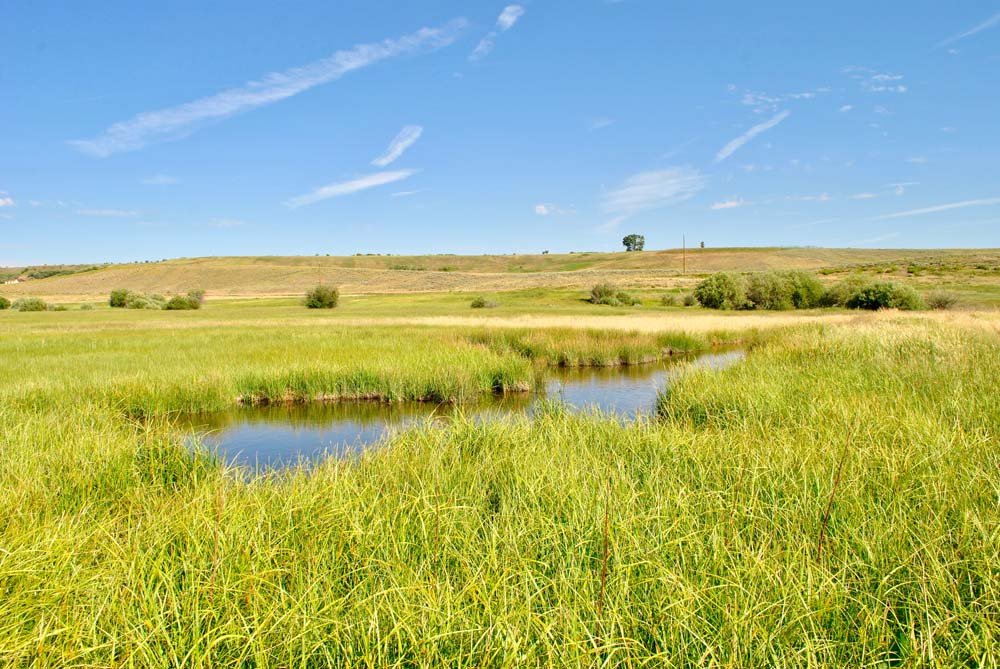 Stream in field at Finger Rock Preserve.